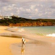 Hunde am Martinhal Beach