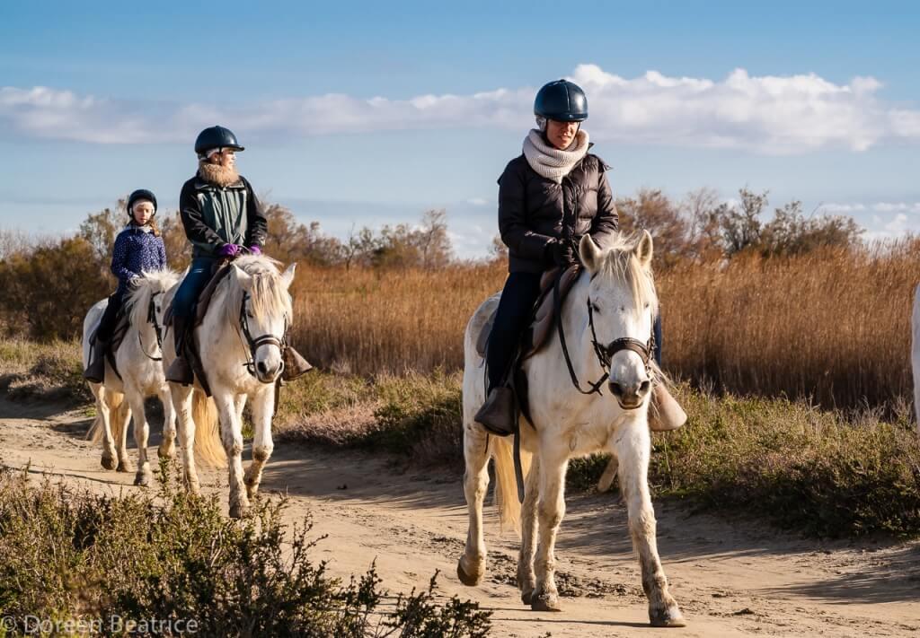 Weiße Pferde der Camargue