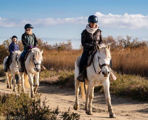 weiße Pferde der Camargue 00363