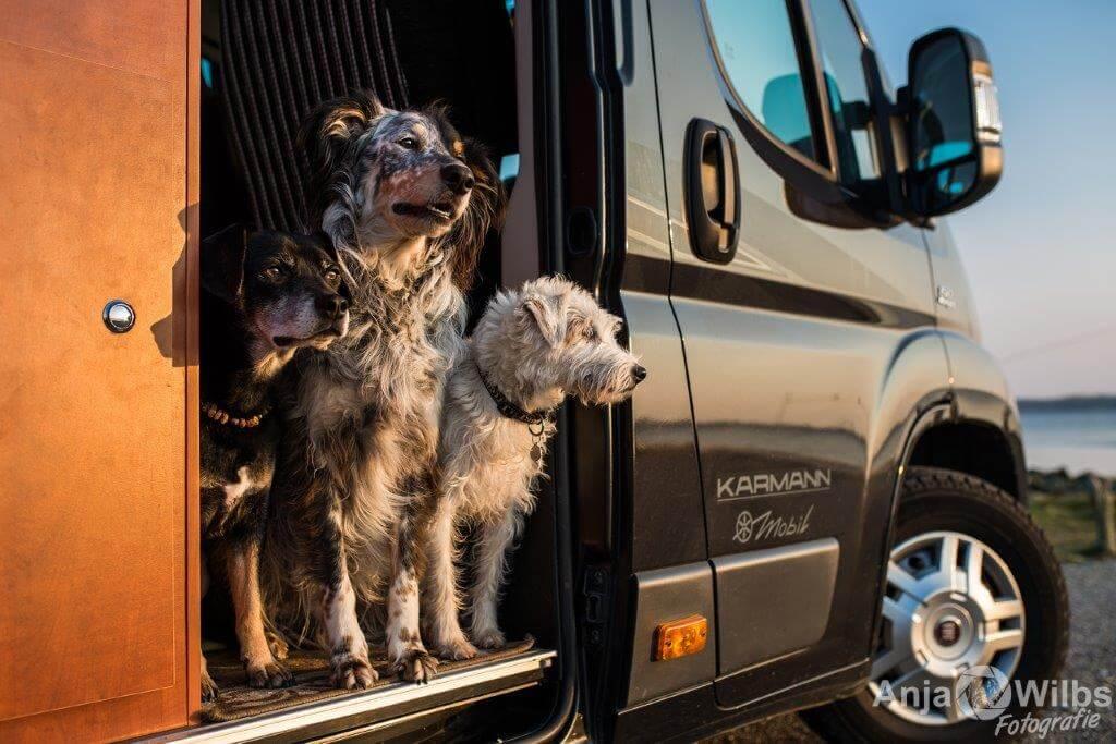 DogCamper ©Anja Wilbs mit Genehmigung D.Scheer