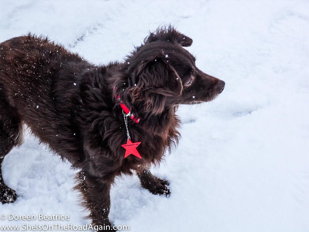Heidi, Freundin des Hauses, im Schnee