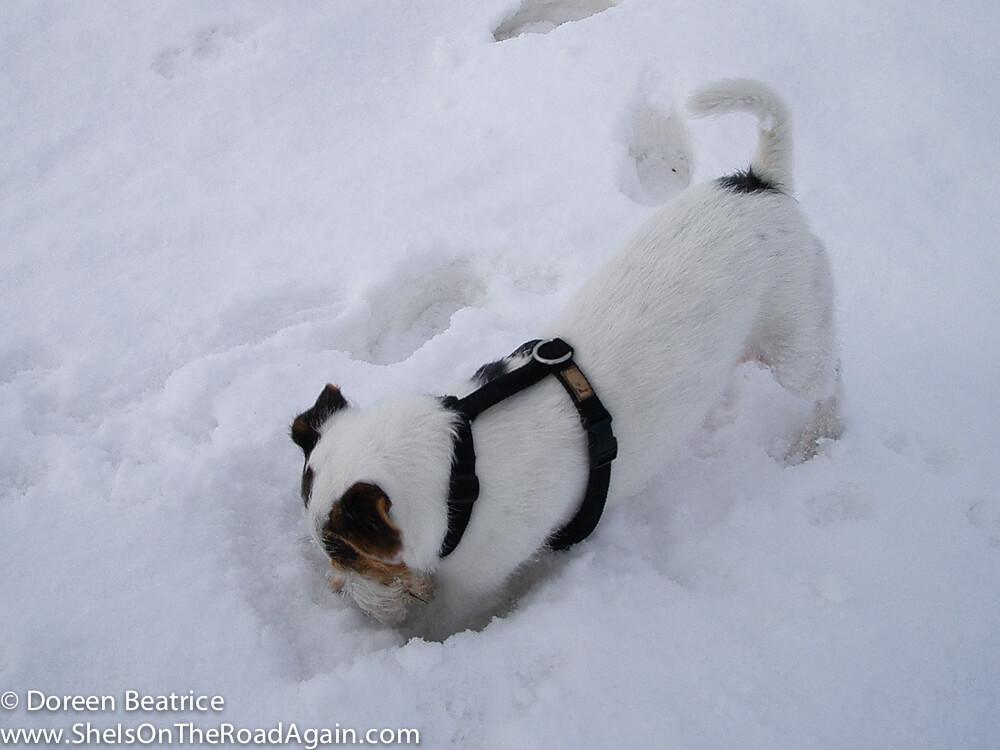 Stuart gräbt im Schnee