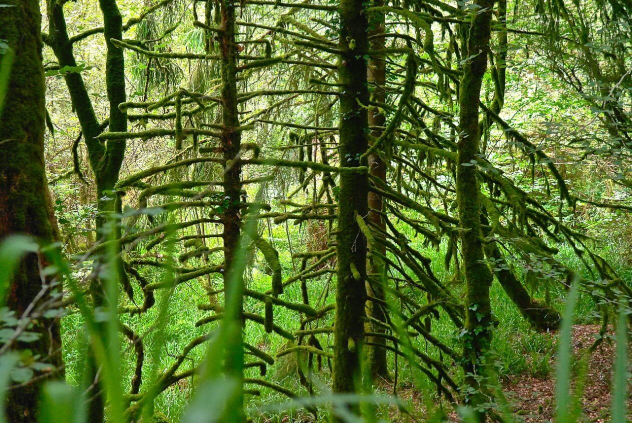 dichter Wald in Huelgoat ©tierisch-in-fahrt.de
