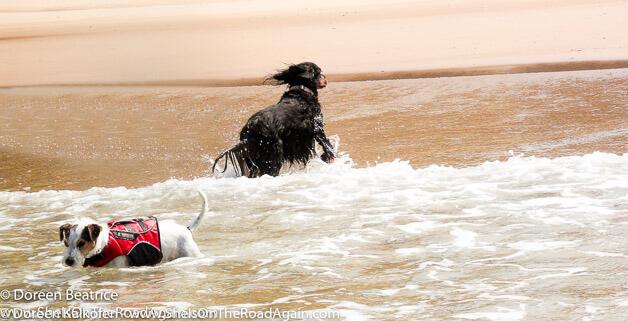 zeigt zwei Hunde im Wasser