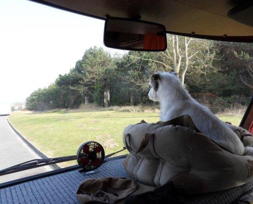 zeigt einen Terrier im Körbchen auf der Ablage vorne im Wohnmobil