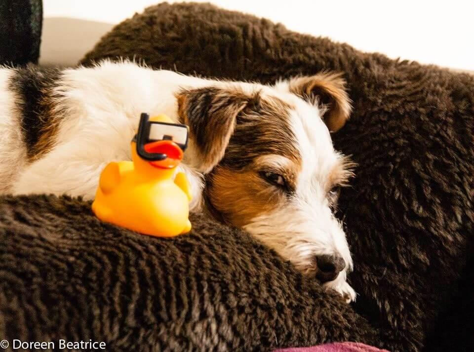 zeigt einen Hund auf einem Kissen