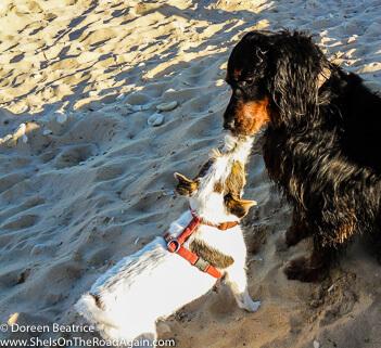 zeigt zwei alte Hunde am Strand