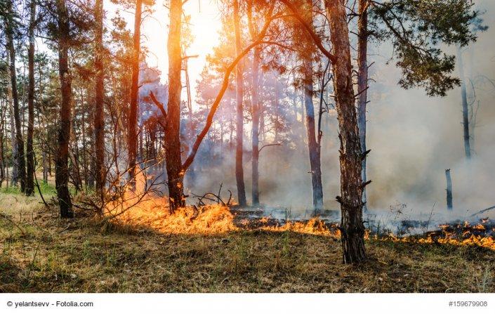 Waldbrände in Portugal 6 Frankreich 2017