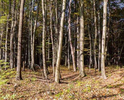 zeigt einen tiefen dunklen Laubwald