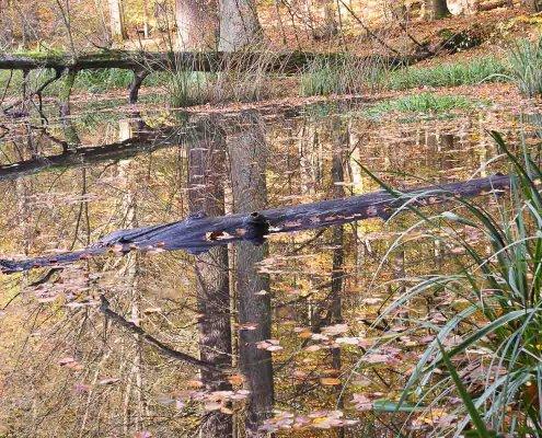 zeigt einen Krokodil-ähnlichen Baumstamm in einem Gewässer