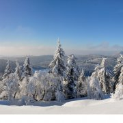 Zeigt verschneite Bäume