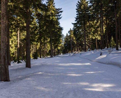zeigt einen verschneiten Winterwanderweg mit Tannen