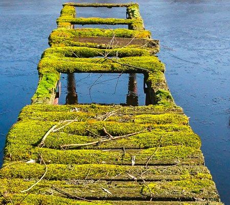 zeigt einen bemooste Steg der in einen See führt