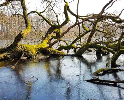 zeigt einen im eisigen See liegenden Baum