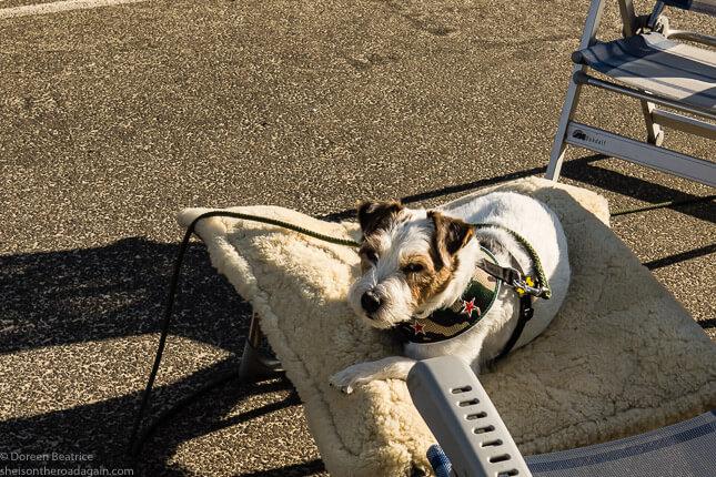 Terrier Stuart Russell auf den Dukdalfs