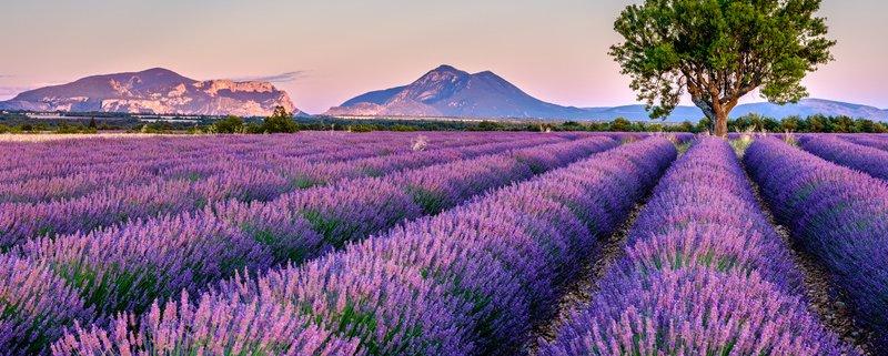 Lavendel in der Provence ©Fotolia163071509