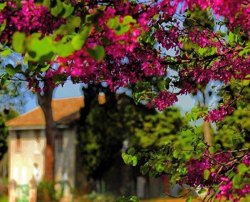 So lebt es sich in der Provence