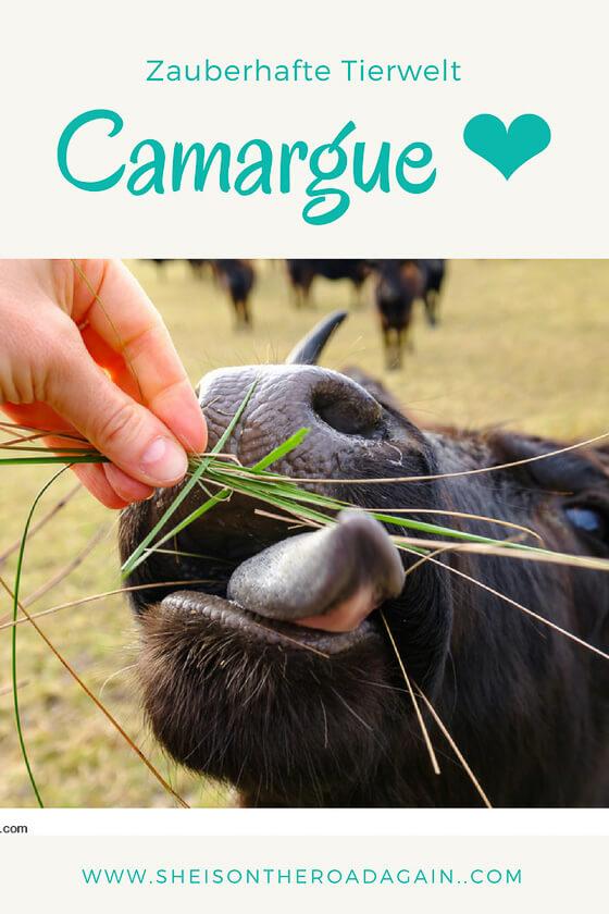 Tierwelt der Camargue ❤ Gesundes Klima, frei lebende Stiere, Flamingos, weiße Pferde ❤ Ausflugs -und Übernachtungstipps