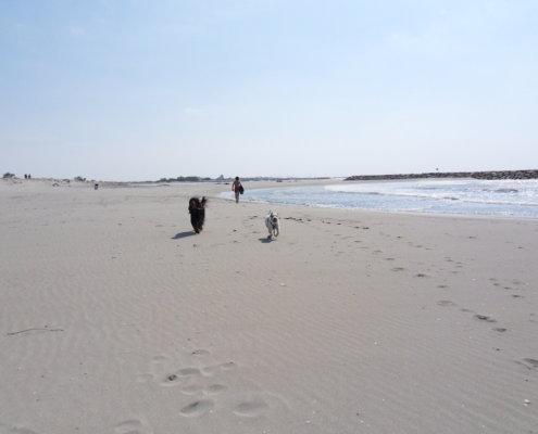 zeigt 2 Hunde am Strand