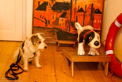 zeigt einen Hund und einen Spielhund