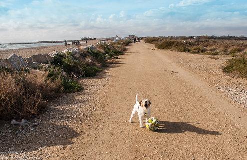 zeigt einen Hund mit Ball auf Sand