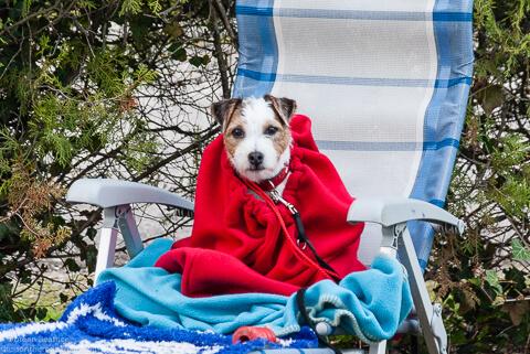 zeigt einen Hund in einem Fleece Sack
