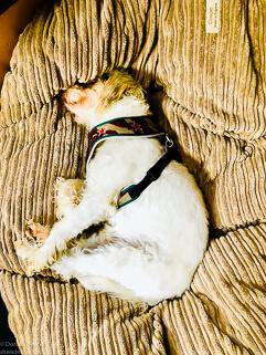 zeigt einen Hund im Körbchen
