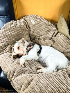 zeigt einen Hund auf seinem Kissen im Wohnmobil