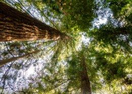 Titelbild Sequoia Farm Kaldenkirchen