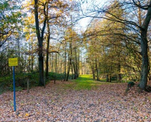 Wanderung am Niederrein - zeigt einen Waldweg mit Herbstlaub