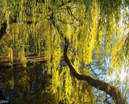 Wanderung am Niederrein - zeigt einen Baum am Fluss