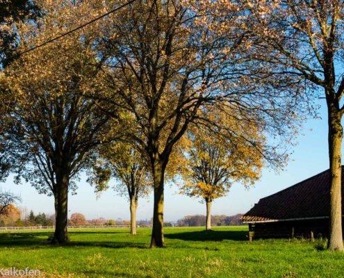 Wanderung am Niederrein zeigt alten Baumbestand in Sassenfeld