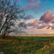 Wolken, Abendrot, freies Feld und Baum