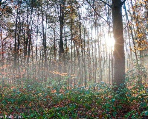 Nebel in einem Wald und Sonne