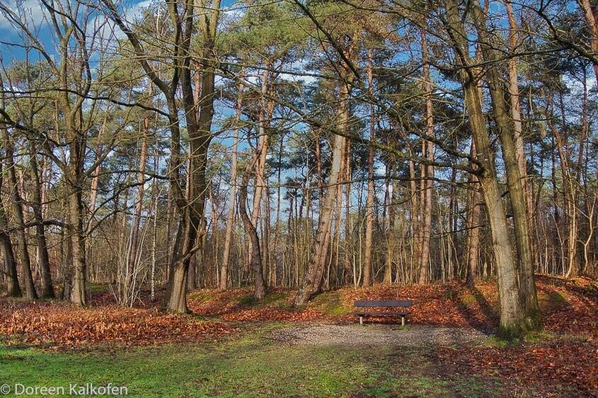 Parkbank im herbstlichen Wald