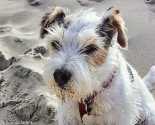Terrier am Strand