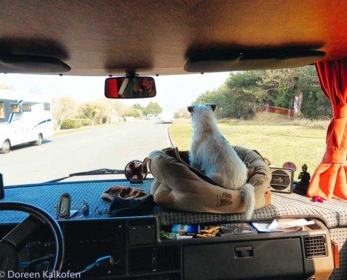 Terrier im Wohnmobil auf der Ablage im Fahrerhaus